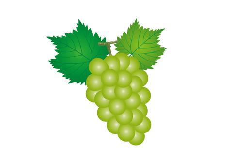 Grape 06