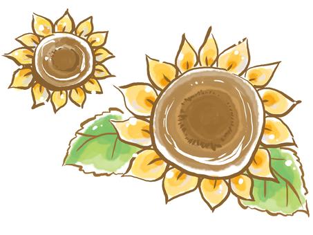 Sunasan basking in sunflower
