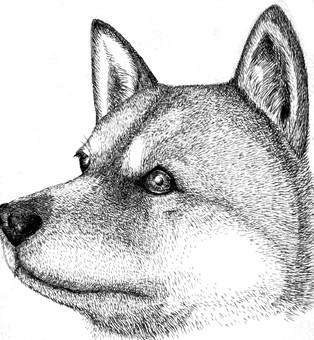Inu pen drawing 1