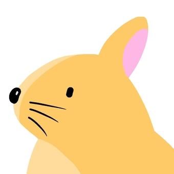 Ana rabbit