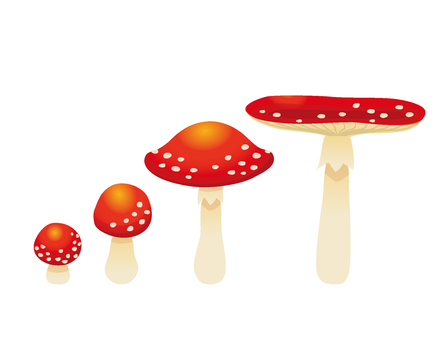 Mushrooms 01