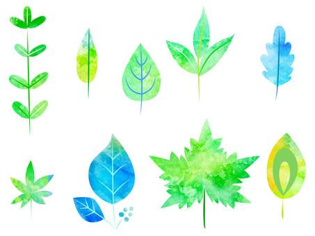Various leaves ver 01