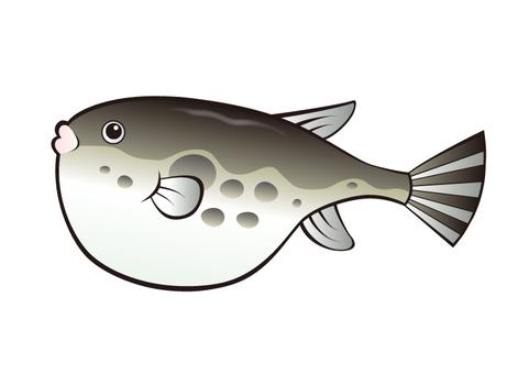 Fish _ Fug