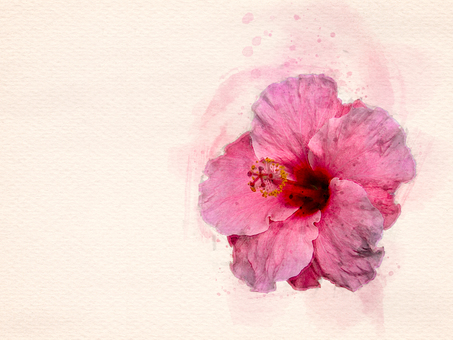[Watercolor] Hibiscus (pink)