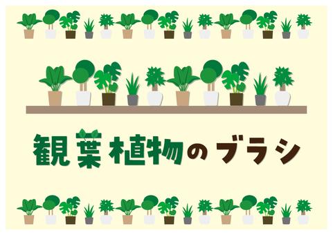 観葉植物のブラシ