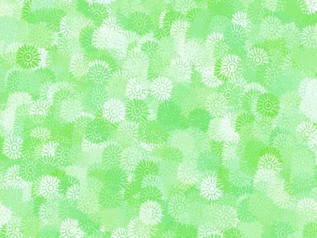 거베라 (녹색)