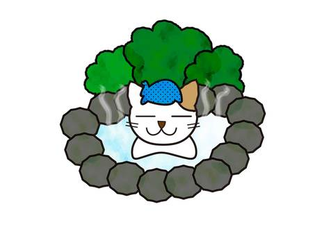 A cat entering a hot spring