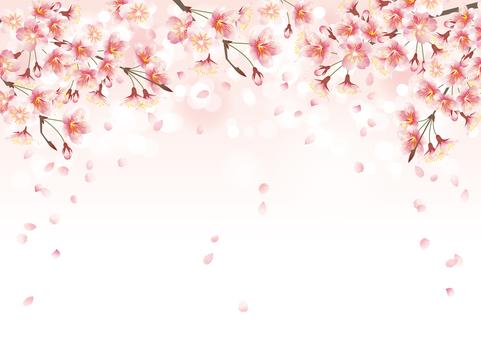 Cherry blossom, petal, petals