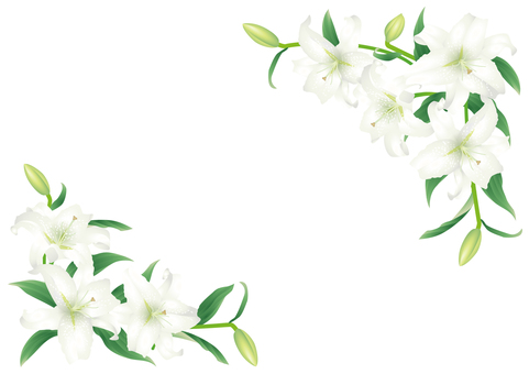 Key frame_Oriental Lily 1