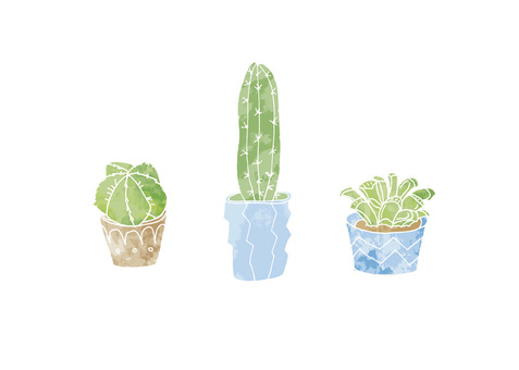 Cacti Succulent illustration 4