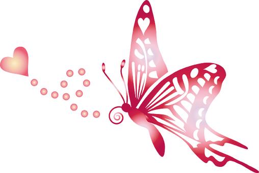 Sue farfalla