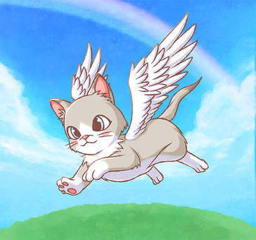 Cat flying in the sky 02