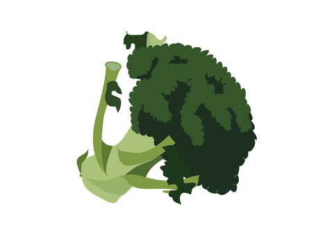 vegetable_ broccoli