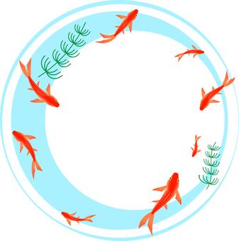 Goldfish frame