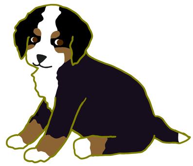 Barneys Mountain Dog
