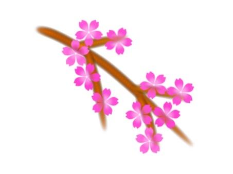 從分支開花的櫻花