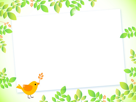 Fresh green and small bird board, Orange