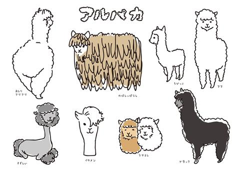 Alpaca variety