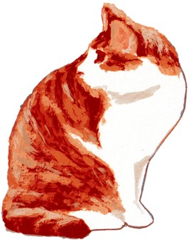 Redhead cat looking back at sitting pose