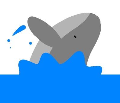 혹등 고래의 표백
