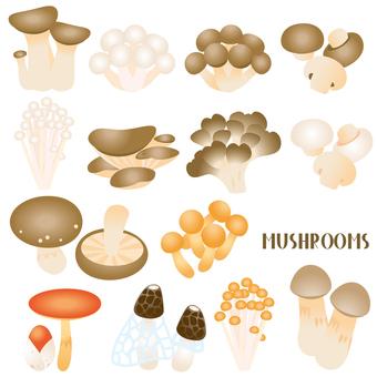 식용 버섯 세트