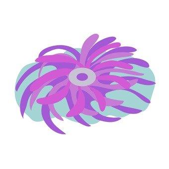 Sea anemone fish 2