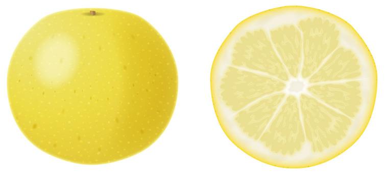 Grapefruit 1 / Fruit