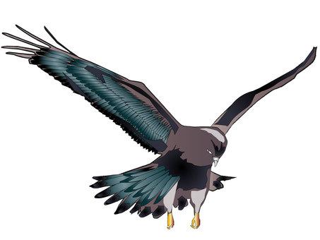 독수리 05