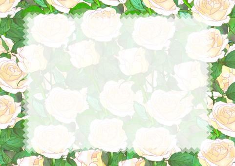 흰 장미 카드