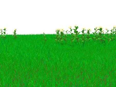 Prairie and flowers _ 002