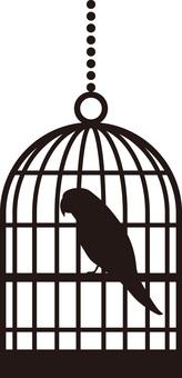 Silhouette into the Tikago parakeet