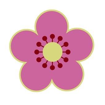 粉紅色的梅花