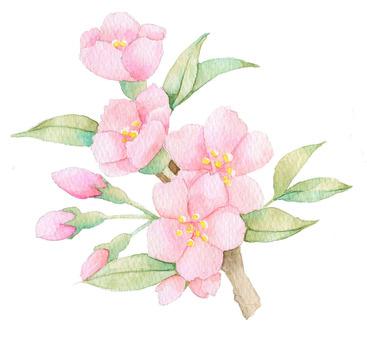 桜 ★0461-S