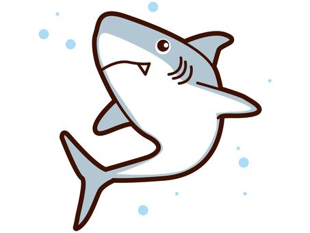 鲨鱼的插图