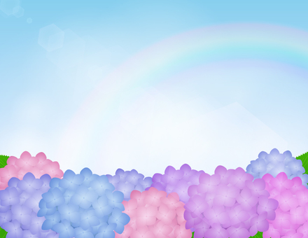 Hydrangea background _ sky