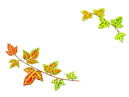 Ivy (autumn leaves)