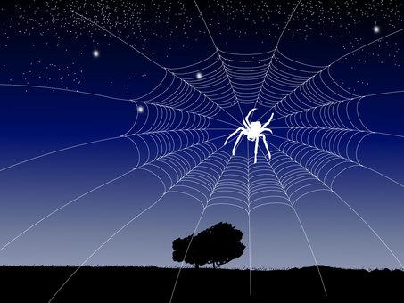 Spider web 04