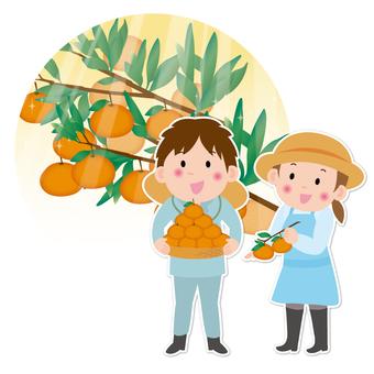 Tangerine farmers