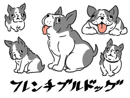 [Dog] French bulldog [dog]