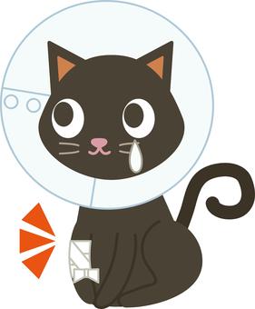 Pet 12 (injury / cat 02)