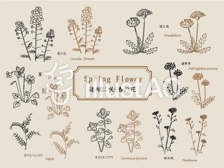 道端に咲く春の花 ペン画イラスト No 992665無料イラストなら