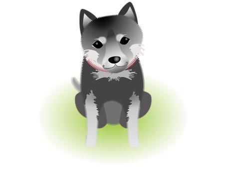 Black turf dog with bulky eyes