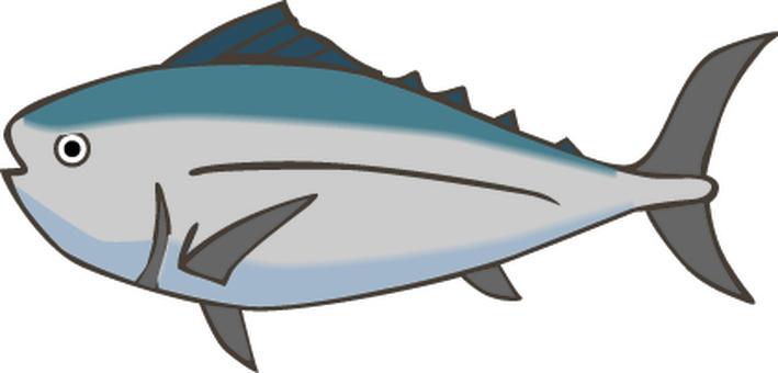 Fish tuna fresh fish sushi fishery