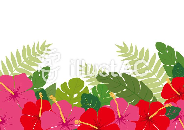 熱帯植物のフレームのイラスト