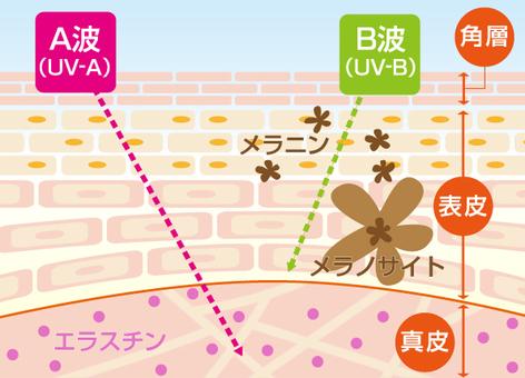 UV skin