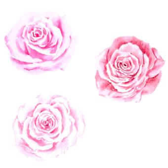 水彩で描くリアルなバラ