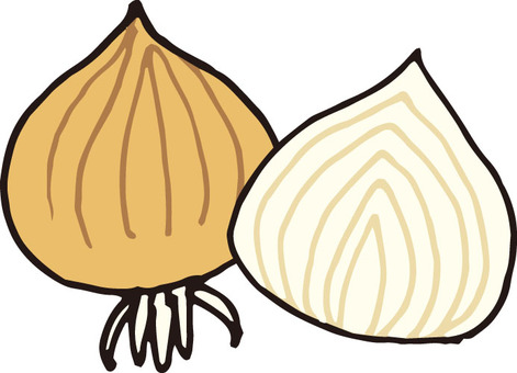 Vegetables (onion, cross section)