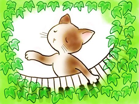 Piano cat 18