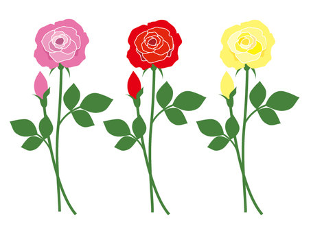 Rose flower color difference 3 types