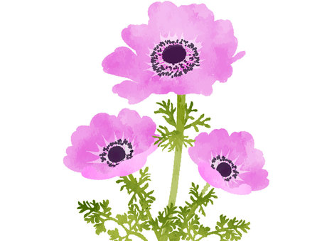 Watercolor-like anemone